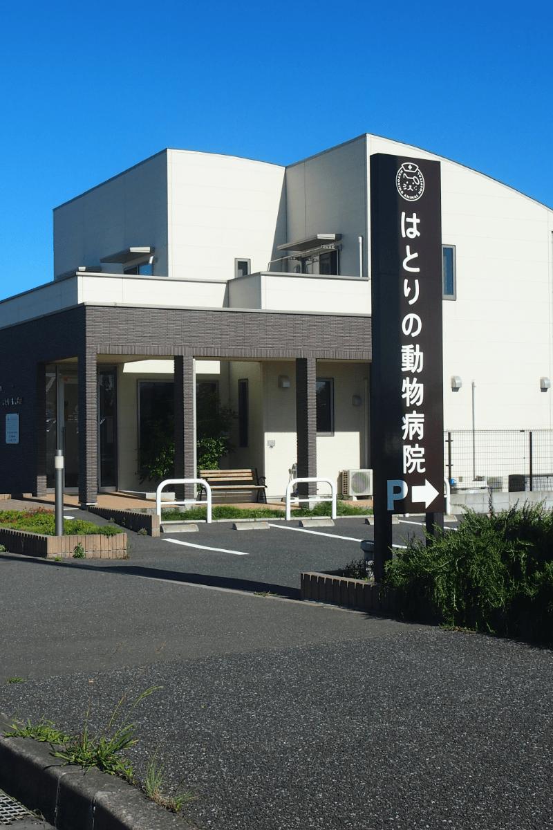 千葉県木更津市【はとりの動物病院】