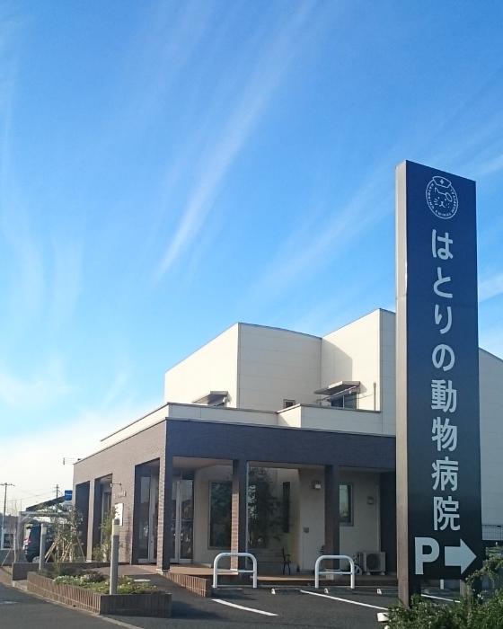 千葉県木更津市羽鳥野動物病院